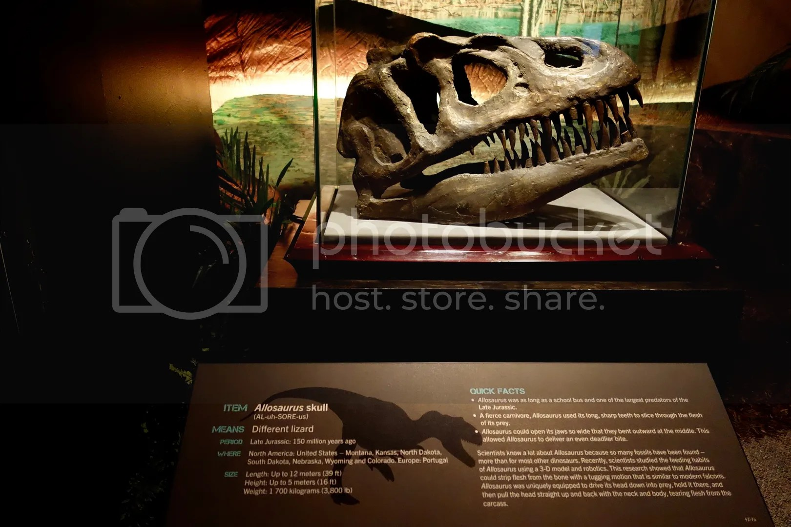 photo Museum of Natural Sciences Fossil 3_zpsxcdzimcv.jpg