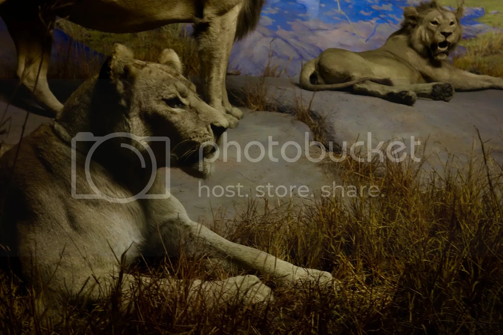 photo Museum of Natural Sciences Lions_zpsd0t8fpmr.jpg