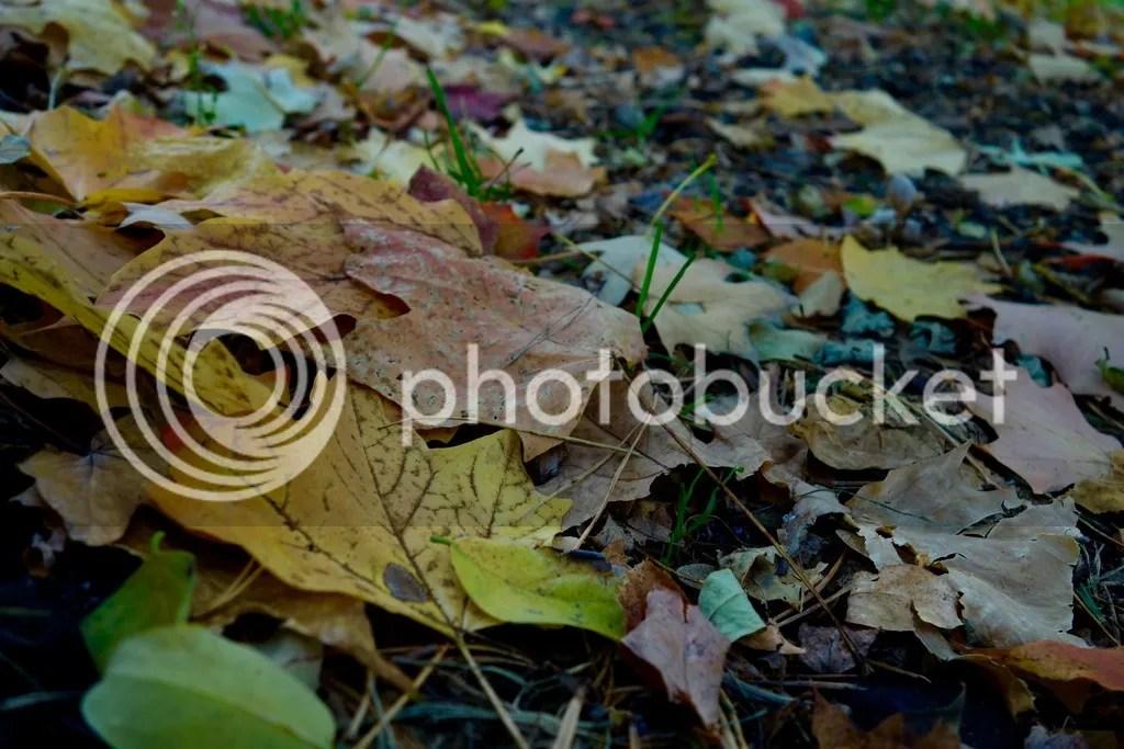 photo Stony Creek Park MI 3_zpsohhlsqy1.jpg