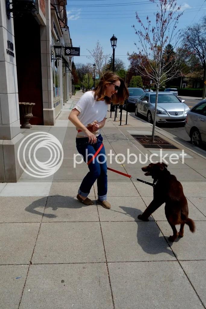 photo Puppy Walks_zpse1xq2nza.jpg