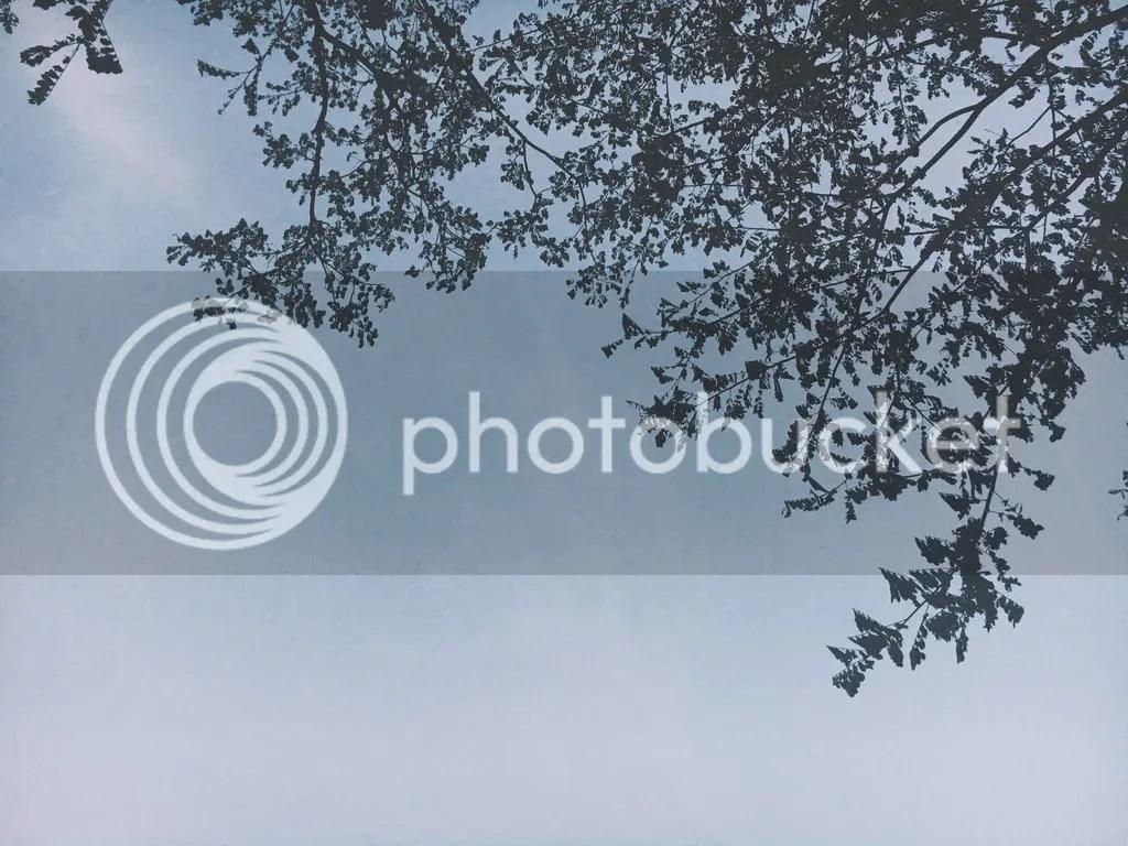 photo IMG_8401_zpsc5r9tche.jpg