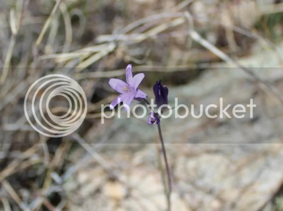 Photobucket Photos