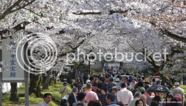 Paseando por Kioto en plena floración de los sakura (templo Daigoji)