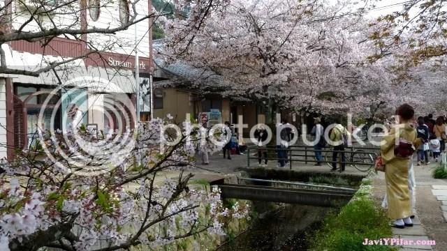 Paseo de la filosofía (Kioto) en plena floración del sakura