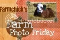 Farmchicks Farm Photo Friday