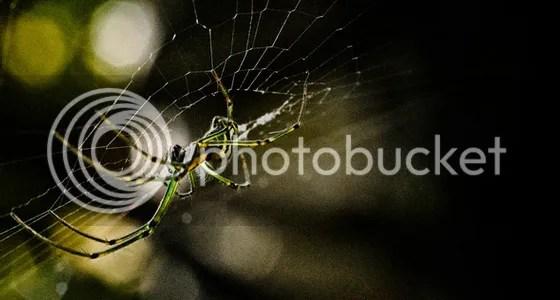 Những tấm hình Macro tuyệt vời thế giới côn trùng