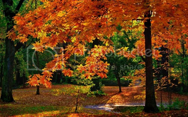 Autumn Forest picture