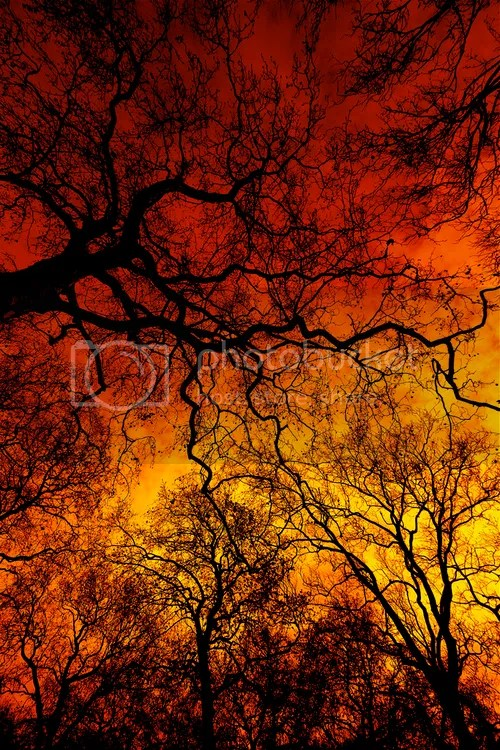 Autumn trees and sky