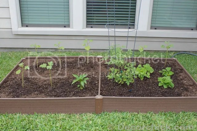 photo vegetablegarden_zps65b48b3c.jpg
