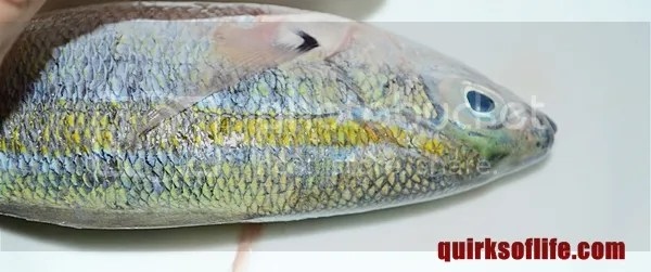 Check the fish scales
