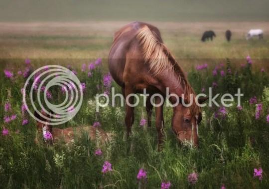 Horses photo _Hourses_zps8cfd644a.jpg