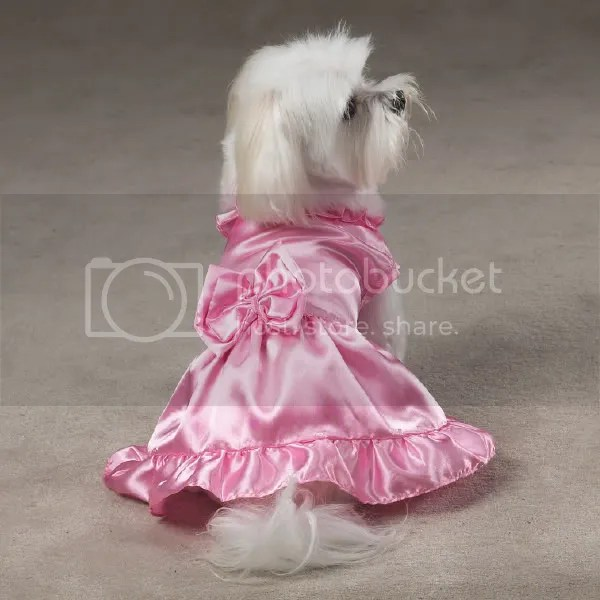 dog bridesmaid Pictures, Images and Photos