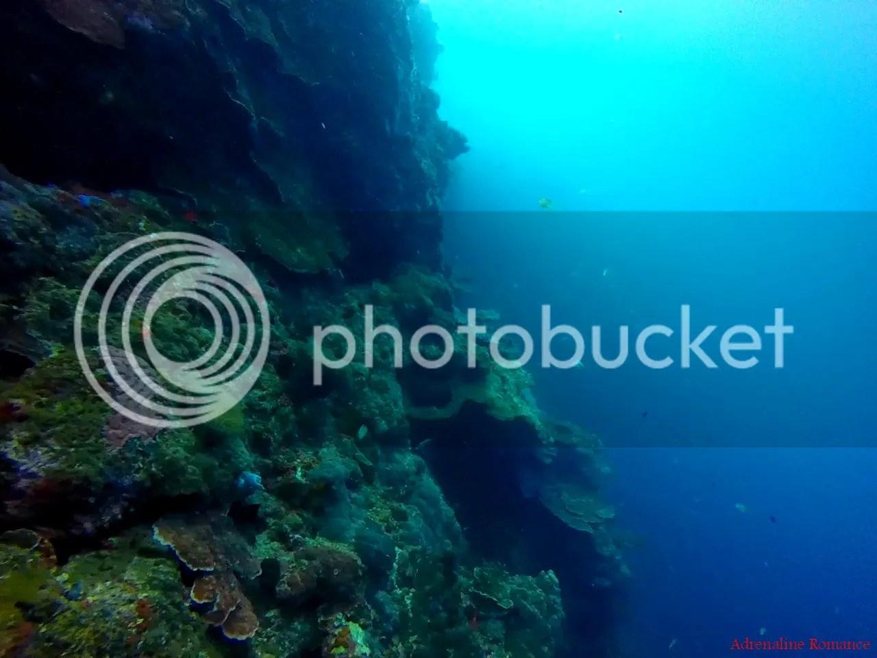 Scuba Diving Apo Island
