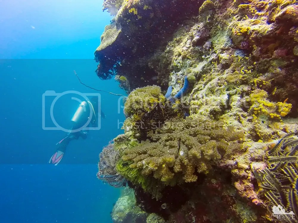 crinoids and hard corals