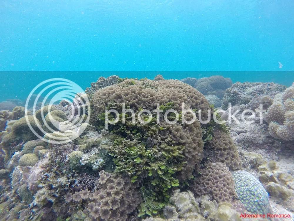 Snorkeling around Nueva Valencia