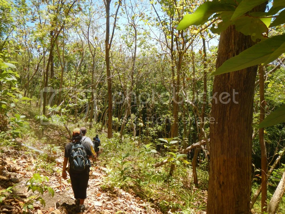 Buhisan DENR Reforestation Area