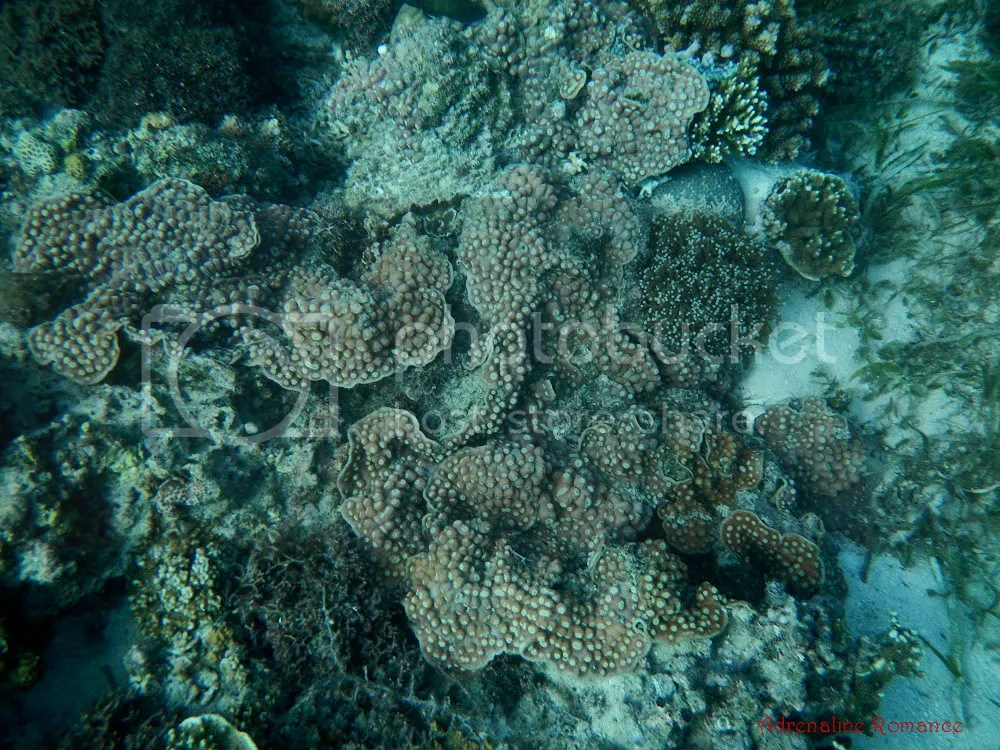 Discover Scuba Diving at Kontiki Dive Resort
