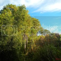 Sagada: A Pocket of Pines, Waterfalls, and Cliffs