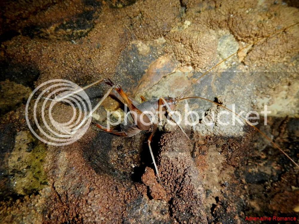 Lobo Cave Jiabong Samar