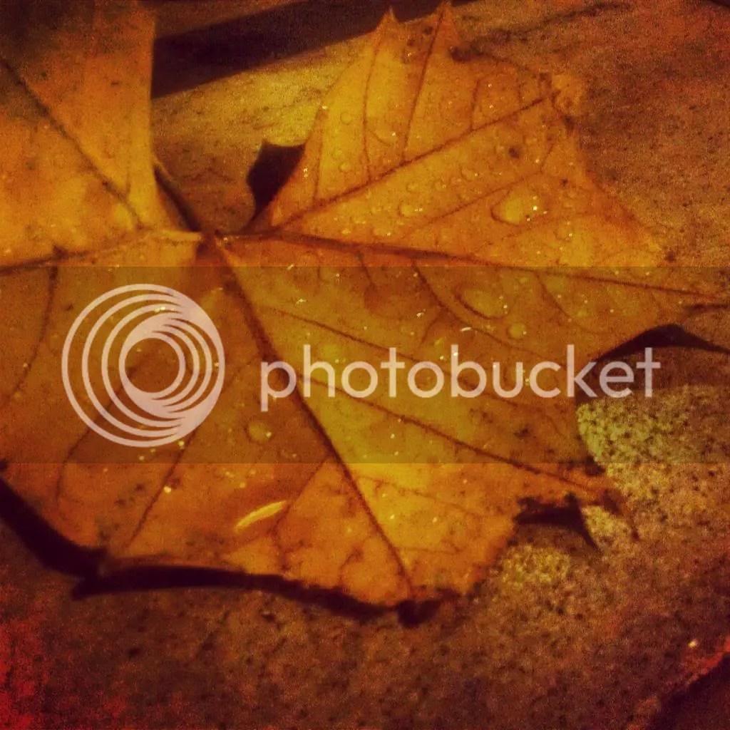 photo IMG_20131120_210008_zpsf0ca6faa.jpg