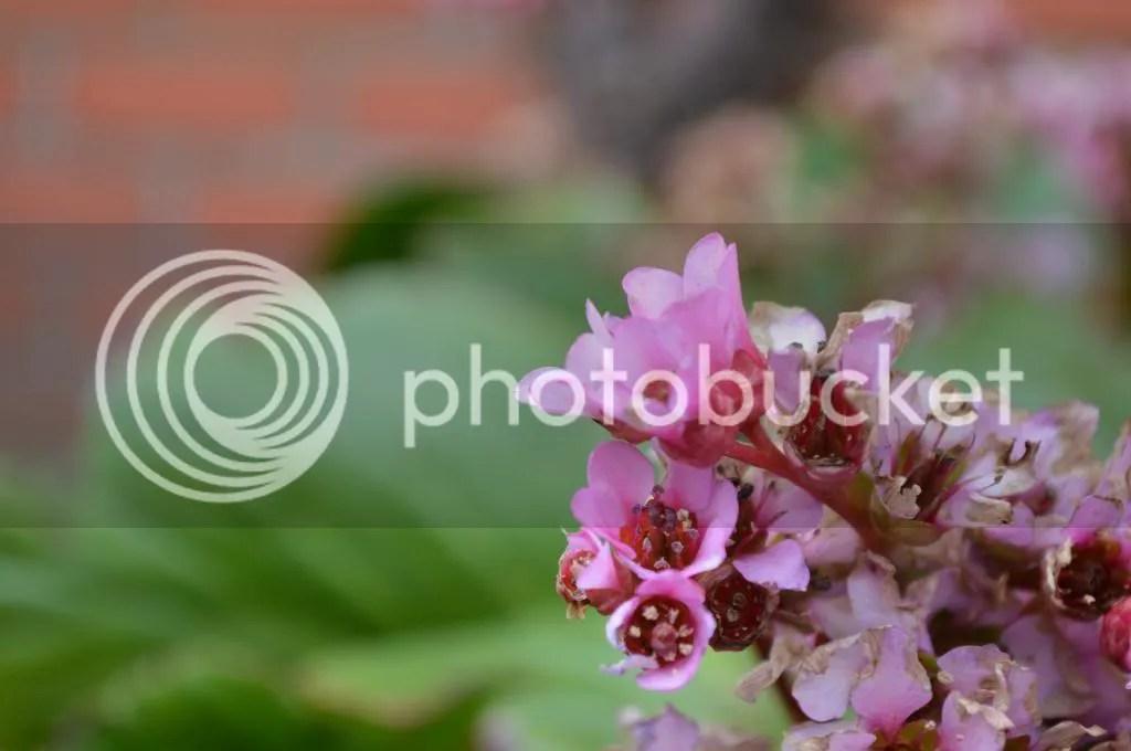 photo DSC_0230_zps35b43050.jpg