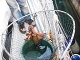 blckfiskklttrarut.jpg