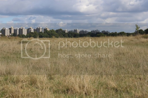 photo Richmond Park October 2016 2_zpsmkytrt2v.jpg