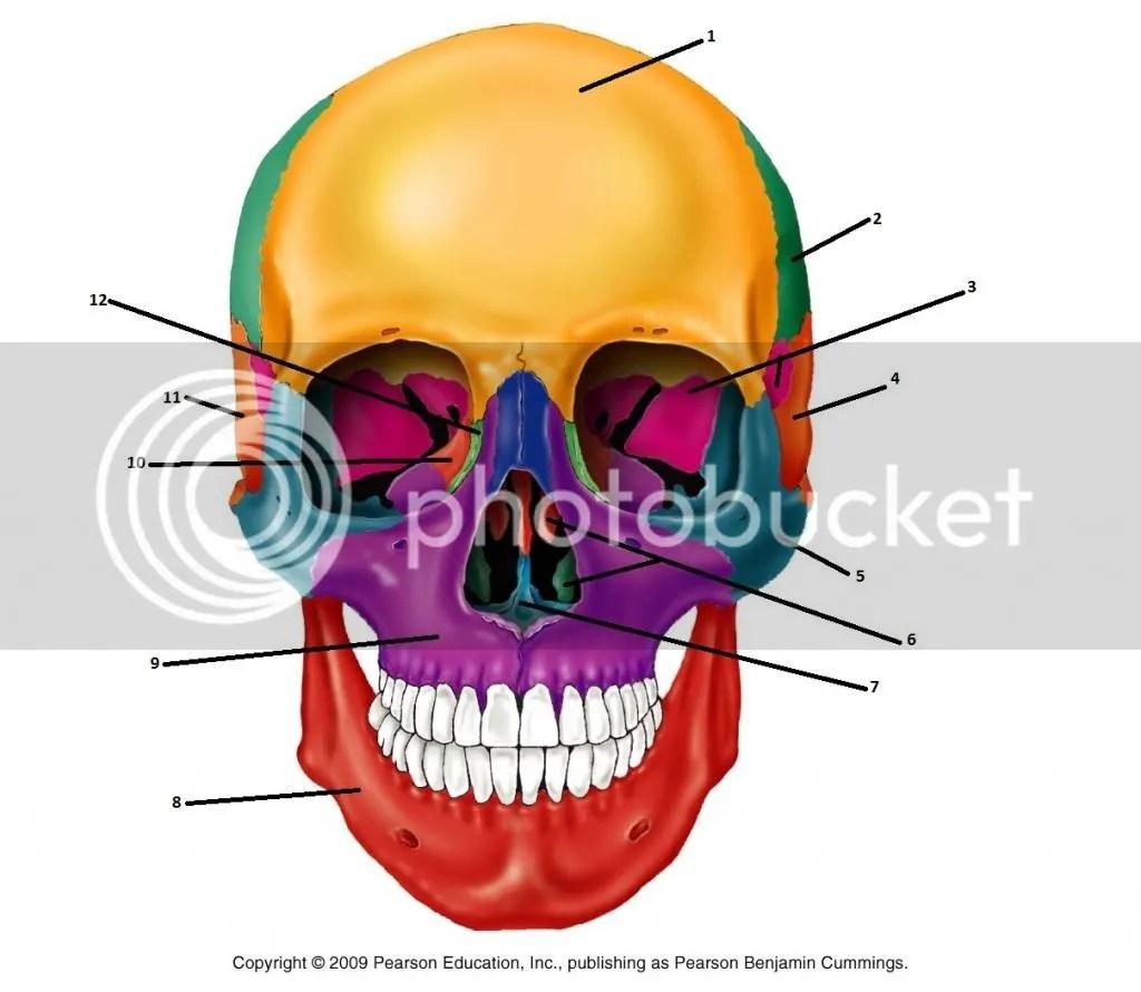 Bones Of The Anterior Skull Quiz