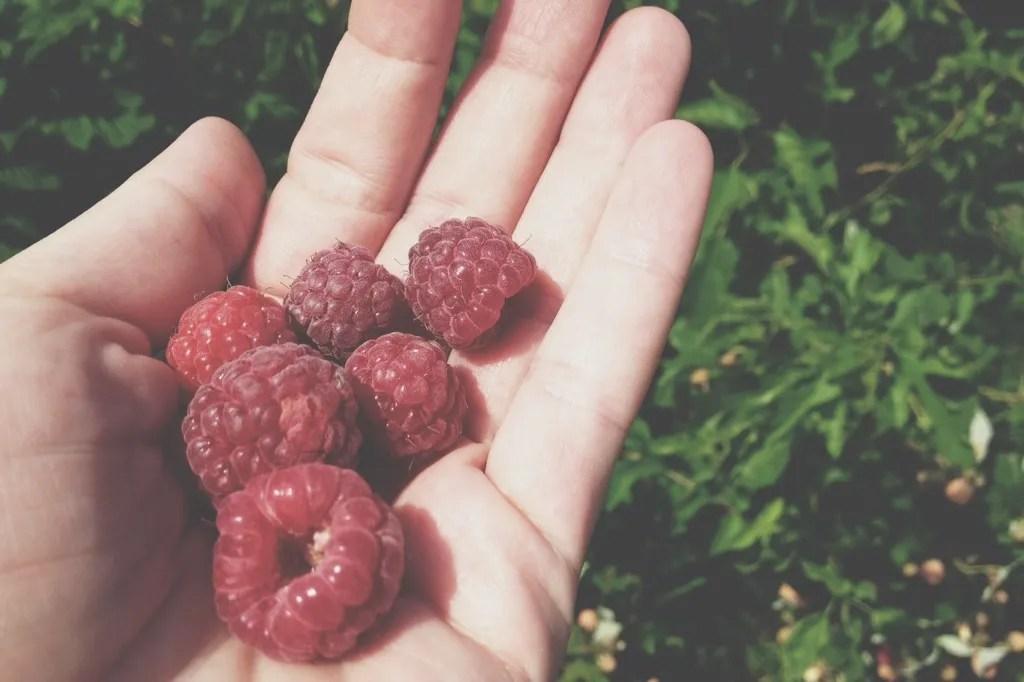 purple raspberries
