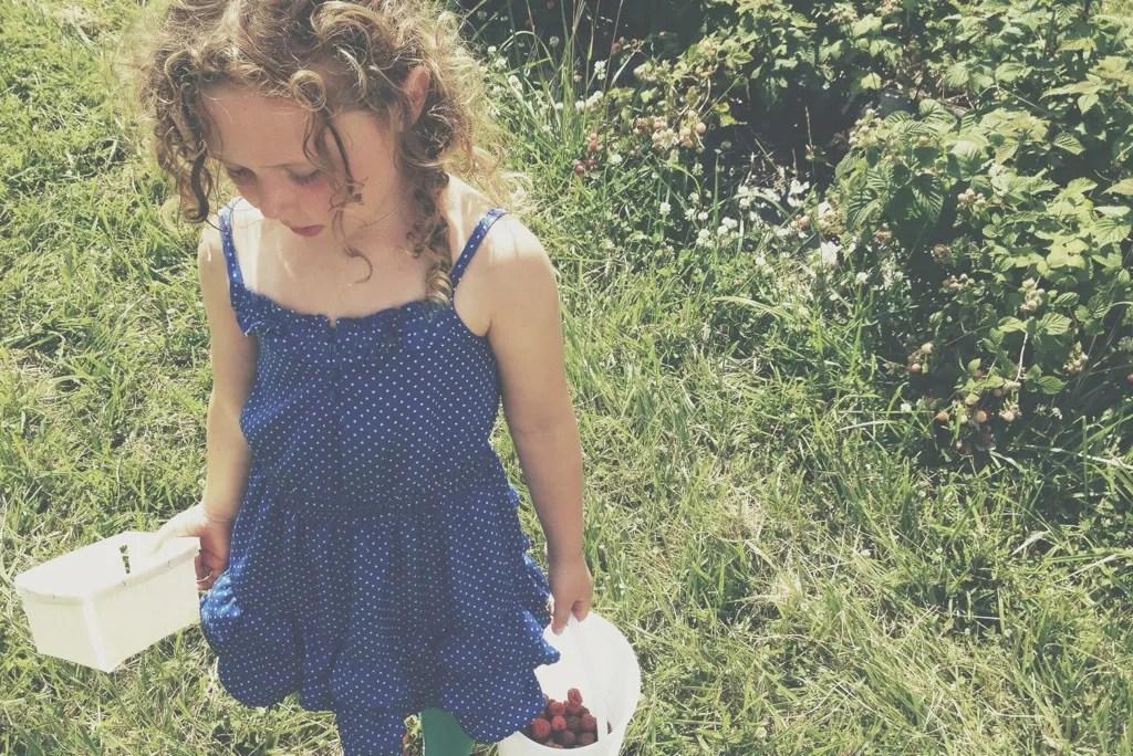 darla picking berries