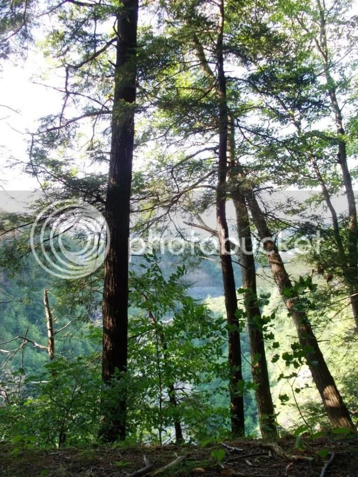 photo trees_zps6071c945.jpg