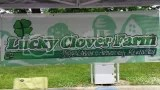 Lucky Clover Farm