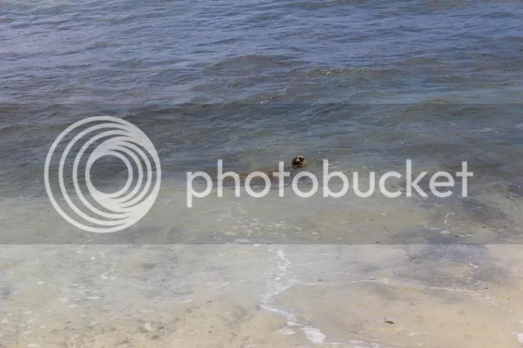 photo IMG_4203_zpsdc36611b.jpg