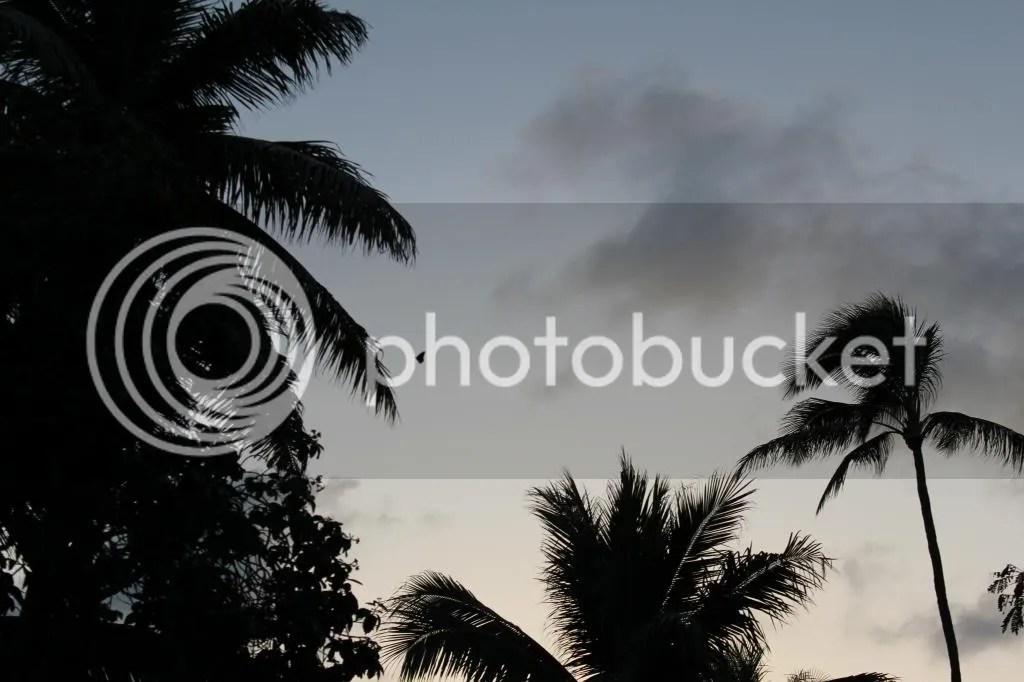 photo IMG_4554_zps9e3f063c.jpg