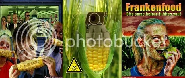 GMO seeds