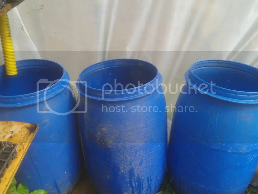 Water butts in Polytunnel for watering and temperature regulation