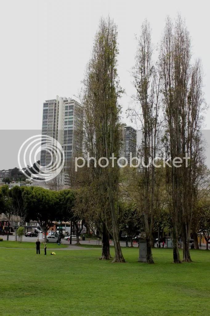 photo IMG_4003_zpsc5cc3d35.jpg