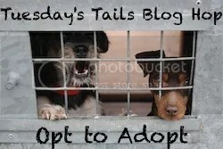 TuesdaysTailsBlogHopOfficialBadge zpsb5025ffe Tuesdays Tails #1:  Ellie Needs A Home!