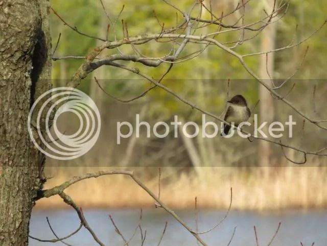 ollar Lake Pheobe photo IMG_4273_zpsb3505f8d.jpg