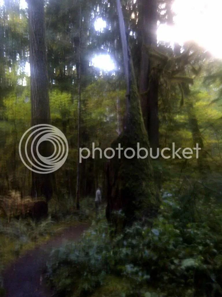 primeval forest photo: Forest primeval IMG-20130903-00413_zps76c12c89.jpg