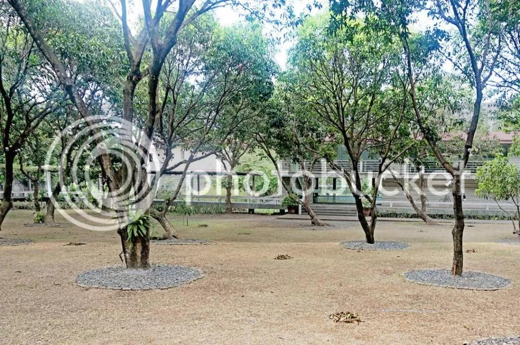 The Mango Farm, Antipolo City