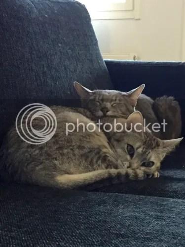 Sitten on hyvä levätä yhdessä sohvalla. Kun vaan ei kuvattaisi aina...