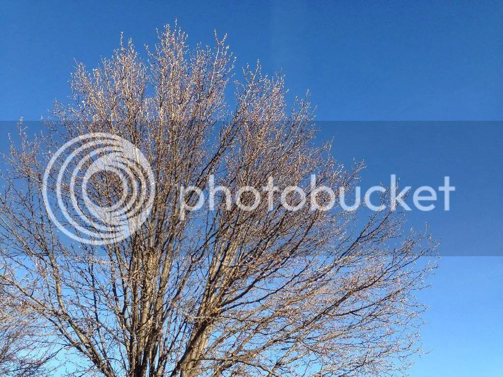 photo 2810471A-EF45-46BC-A51C-E6951FD7BDF9_zpsmetcjfkh.jpg