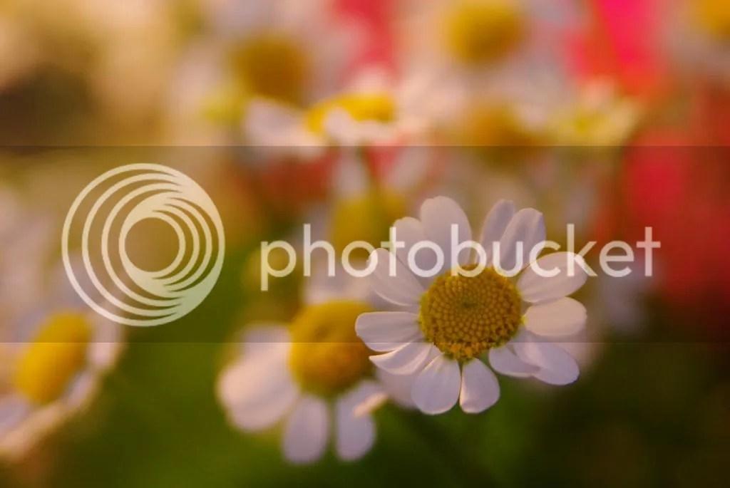 photo IMGP0006_zpse96709ea.jpg