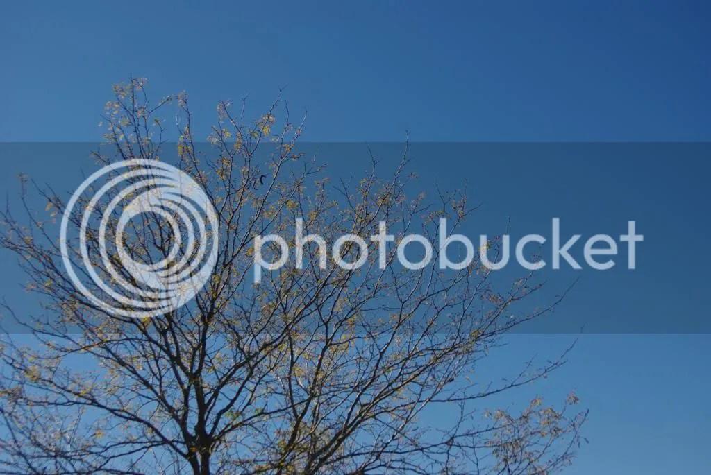 photo IMGP0072_zps76786bc3.jpg