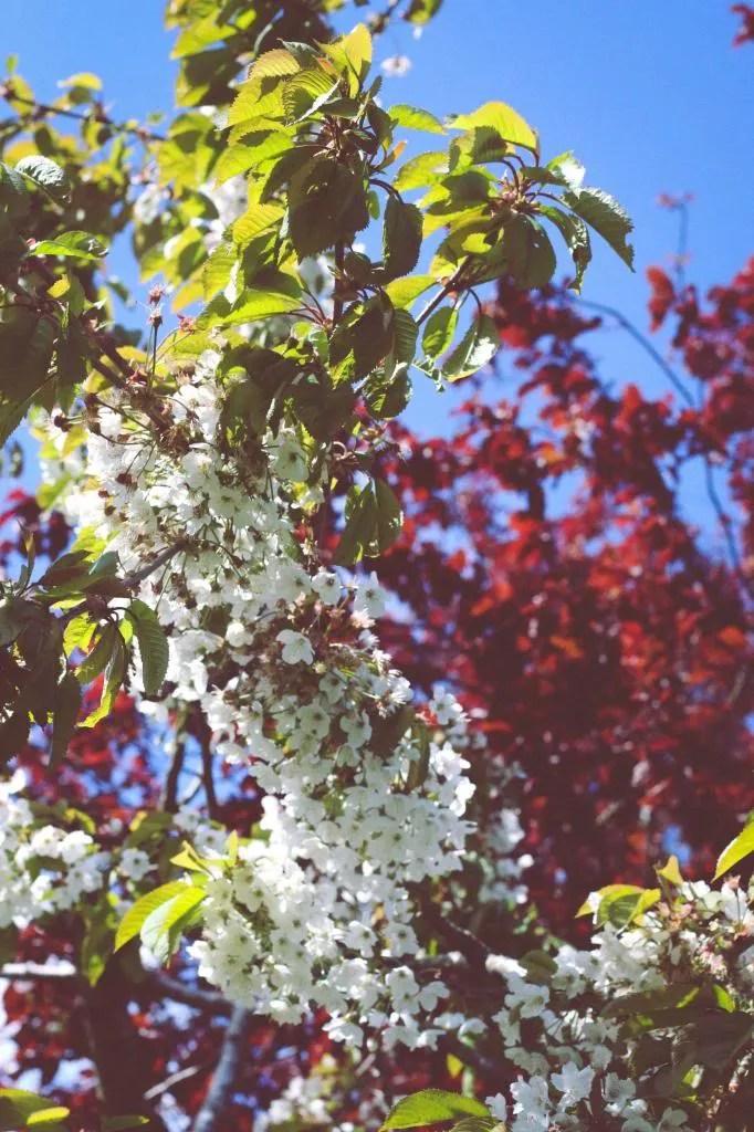 photo Spring_zps1af812bf.jpg