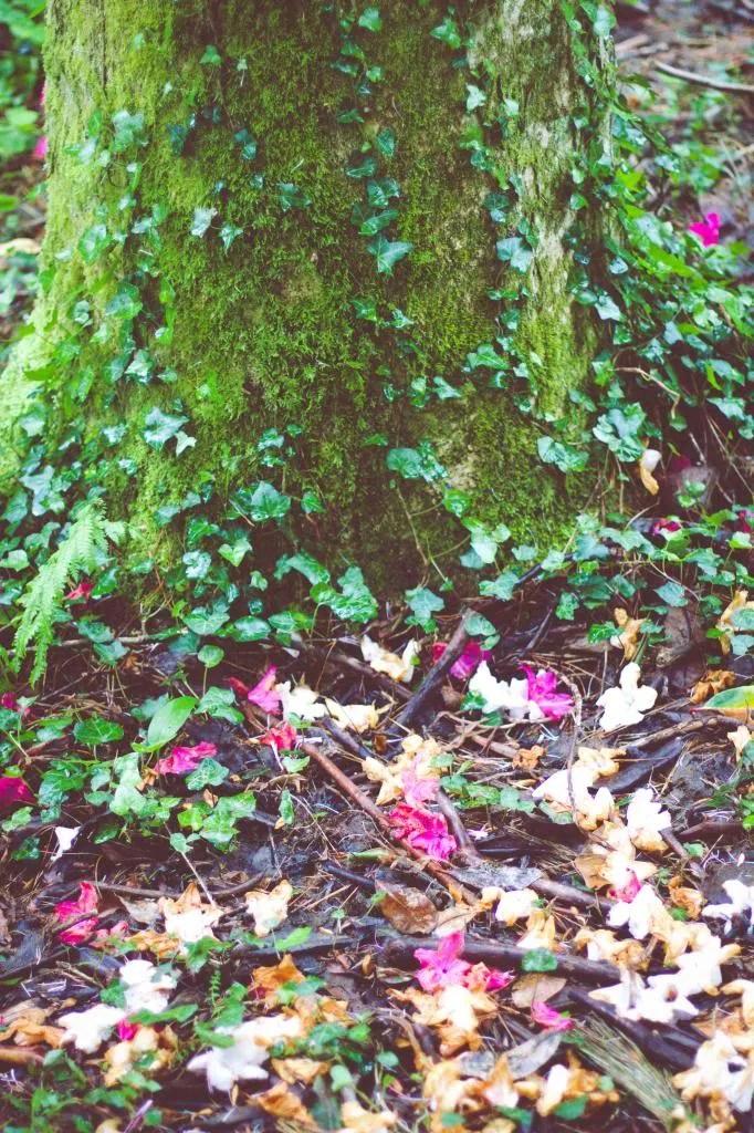 photo tree_zps35da5888.jpg
