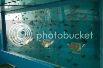 The Oita Marine Center Feeding Tank