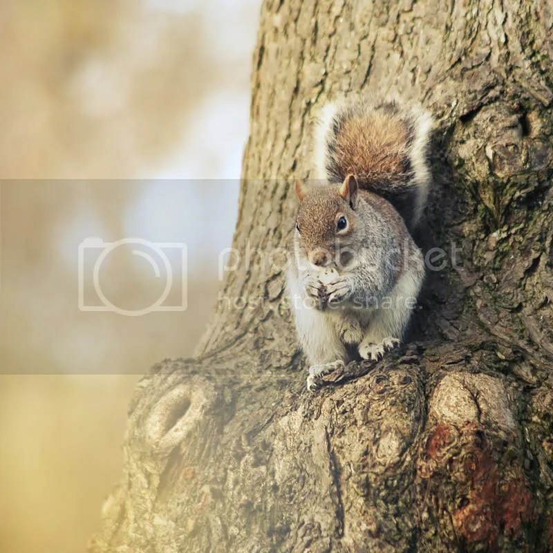 Squirrel - Kelly J Photography - Portrait Photographer Chester North West North Wales