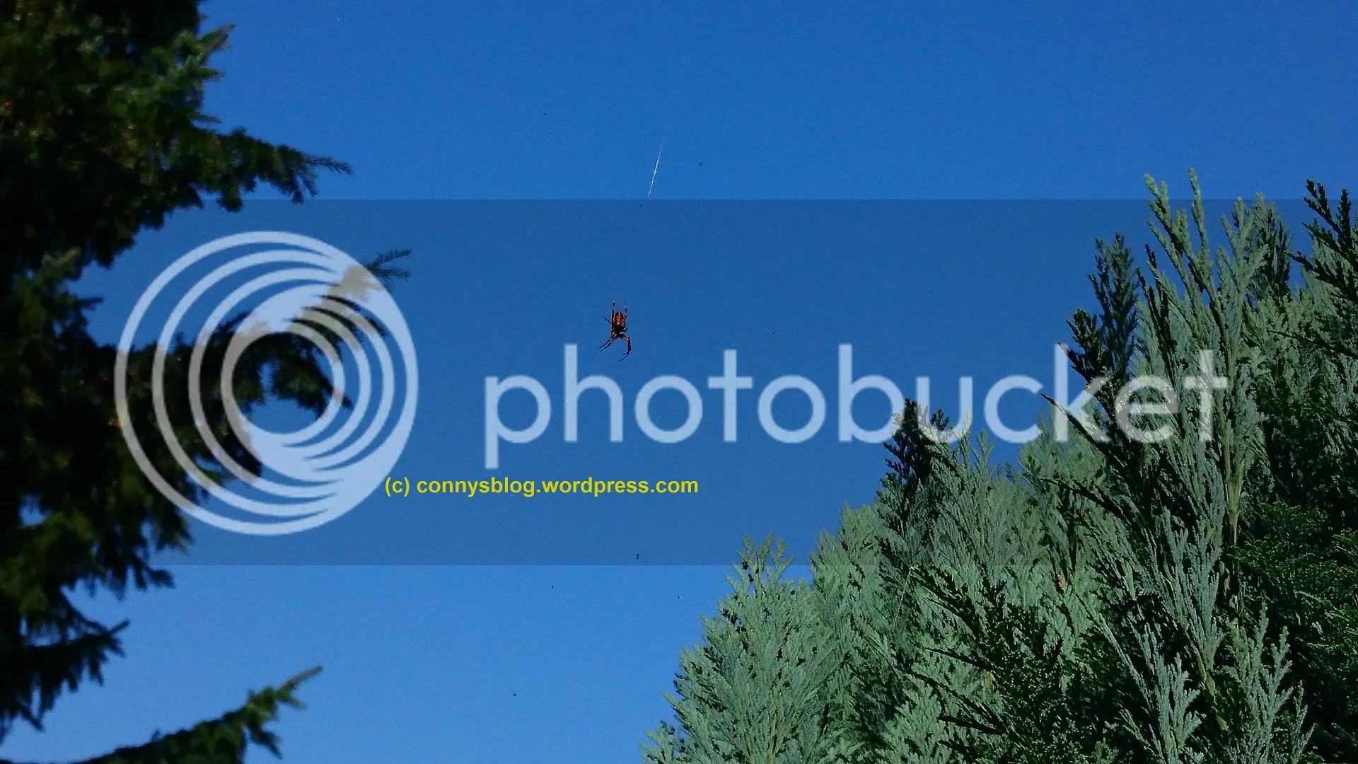 photo finde-die-spinne4_zpsv3xy7hn0.jpg